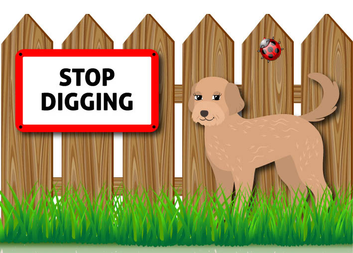 Options To Stop A Cockapoo From Digging Under The Fence