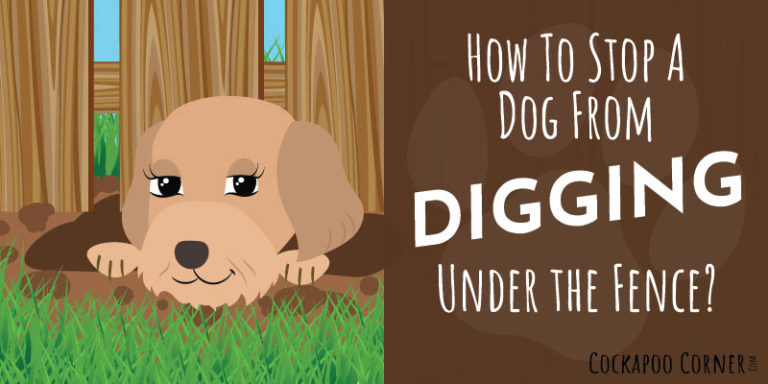 How To Stop A Dog From Digging Under The Fence