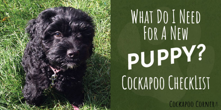 What Do I Need For A New Puppy? Cockapoo CheckList