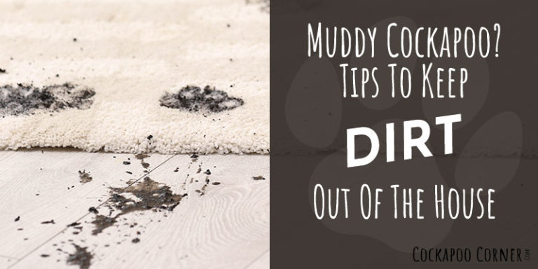 Muddy Cockapoo – Tips To Keep Dirt Out Of The House